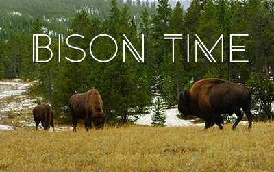 Bison Time