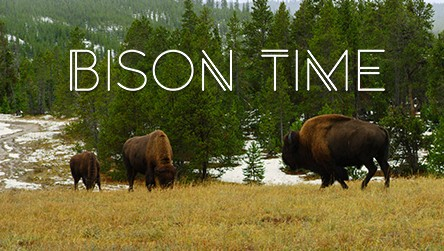 Check out Bison Time - HDR Video