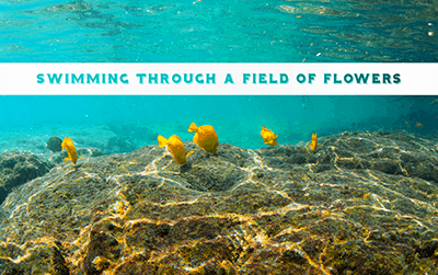 Swimming Through a Field of Flowers – Calming Coral Reef Videos by Spectiv