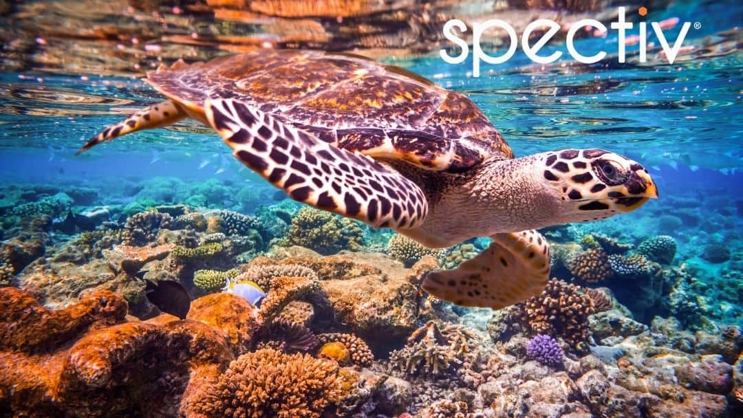 Ocean Videos by Spectiv | Calming Relaxation on Demand
