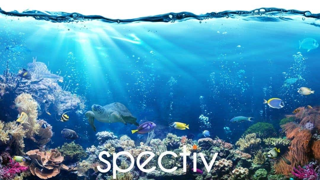 Aquarium videos by Spectiv - Relaxing Ambient Scenery.