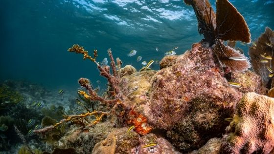 a coral reef in Florida.