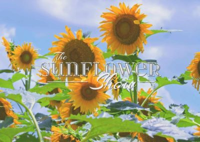 The Sunflower Show by Spectiv